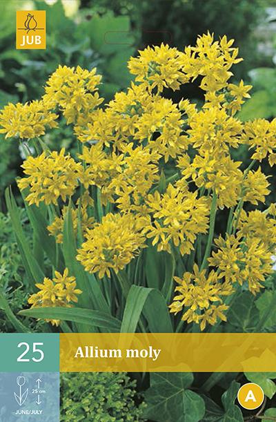 Allium Moly 25st.