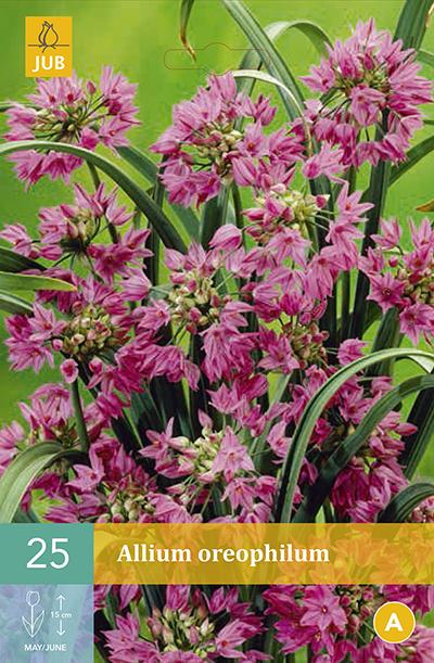 Allium Oreophilum 25st.