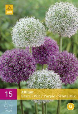 Allium Purple - White mix 15st.