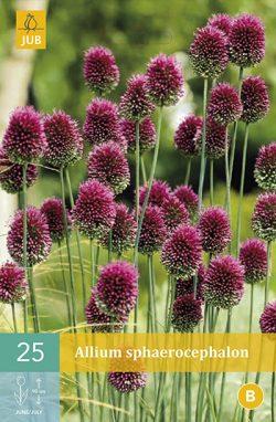 Allium Sphaerocephalon 25st.