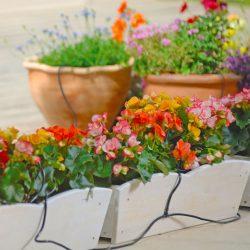 Bewateringsset Flopro voor potten & bakken