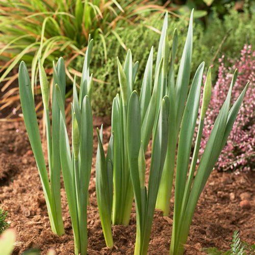 Bollenplantmanden 23,5 x 21cm (3 stuks)