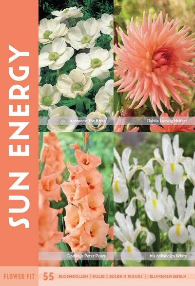 Flower Fit Sun Energy 55st.