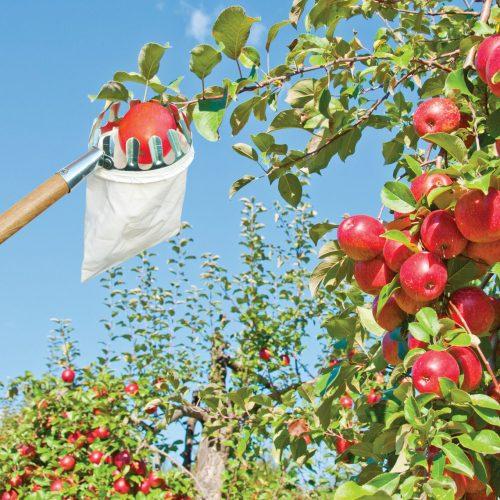 Fruitplukker