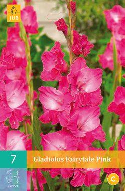 Gladiool Fairytale Pink 7st.