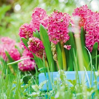 Hyacint Jan Bos 5st.