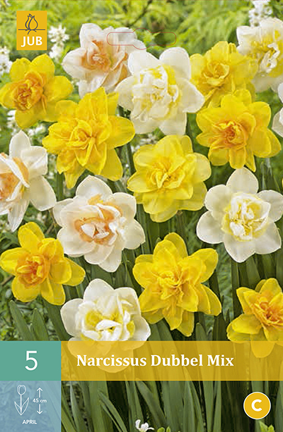 Narcissus Double Mix 5st.