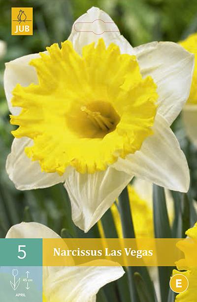 Narcissus Las Vegas 5st.