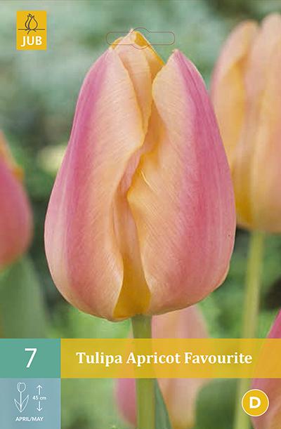 Tulpen Apricot Favourite 7st.