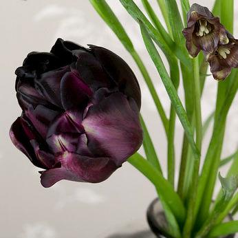 Tulpen Black Hero 7st.