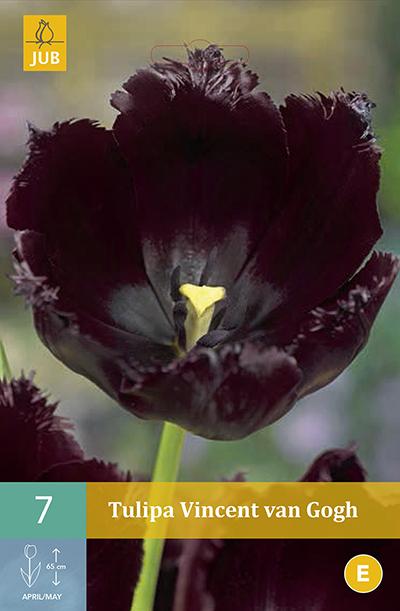 Tulpen Vincent van Gogh 7st.
