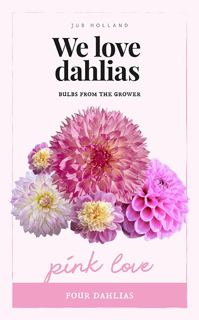 We Love Dahlia's Pink Love 4st.