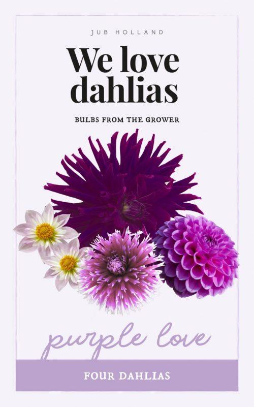 We Love Dahlia's Purple Love 4st.