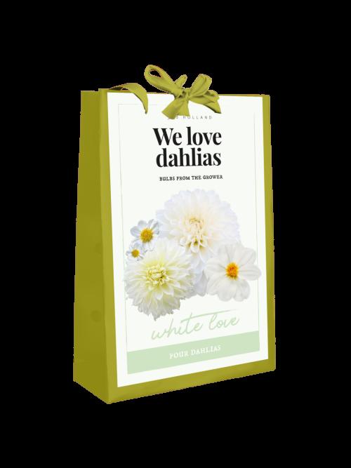 We Love Dahlia's White Love 4st.