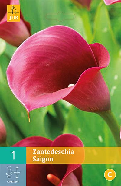 Zantedeschia Saigon 1st.