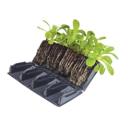 rapid rootrainer kweektray